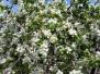 Obiceiuri - Floriile